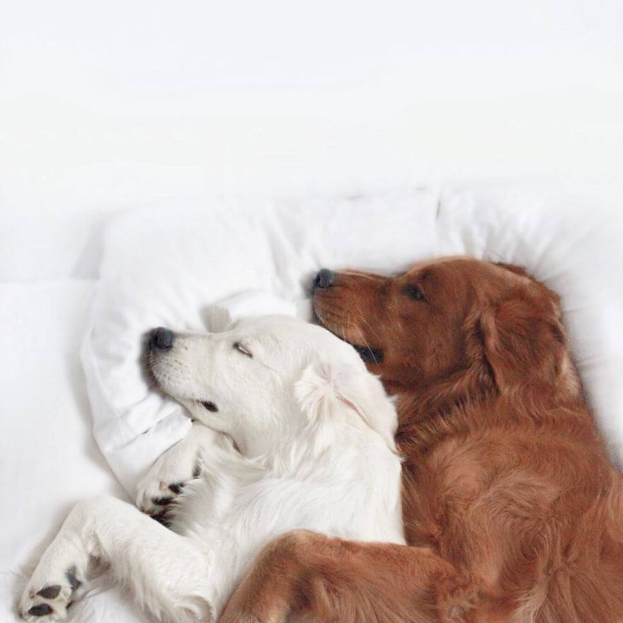 pet animals stars of instagram 23 (1)
