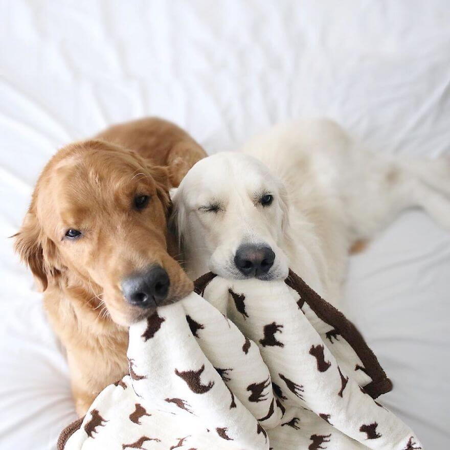 pet animals stars of instagram 24 (1)
