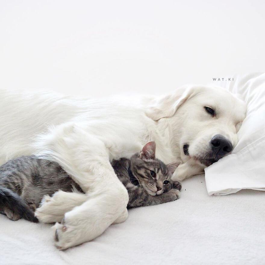 pet animals stars of instagram 26 (1)
