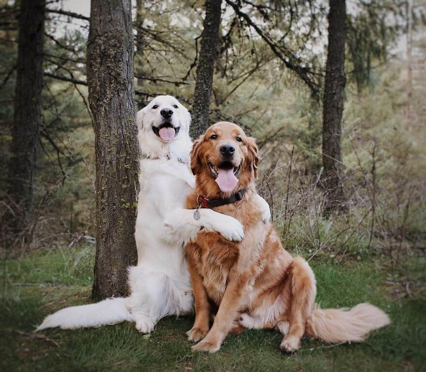 pet animals stars of instagram 27 (1)
