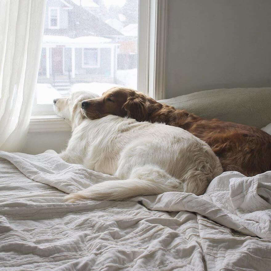 pet animals stars of instagram 28 (1)