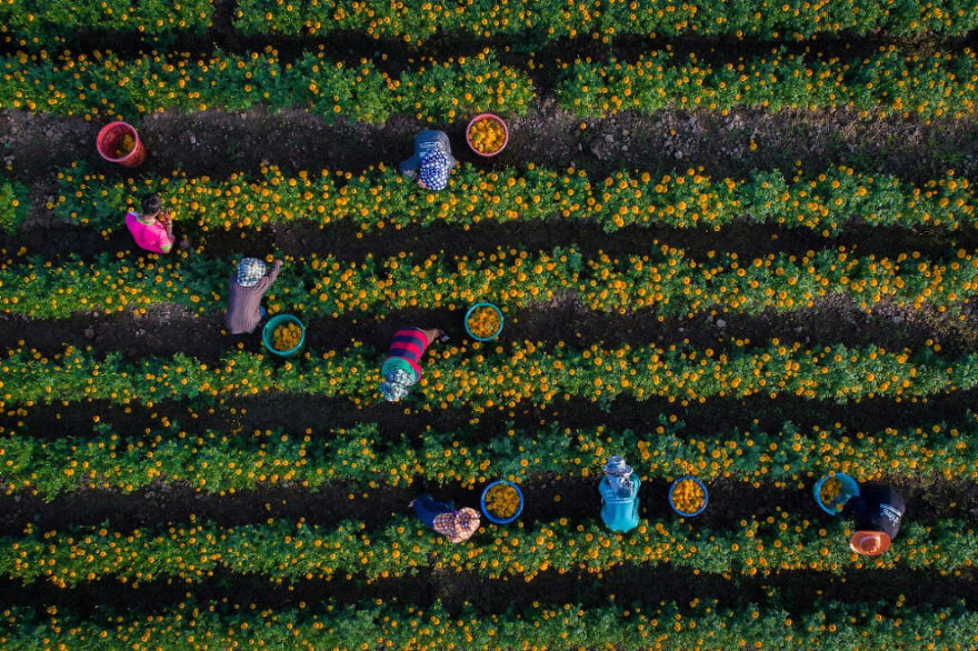 Best Drone images Of 2017 13 (1)