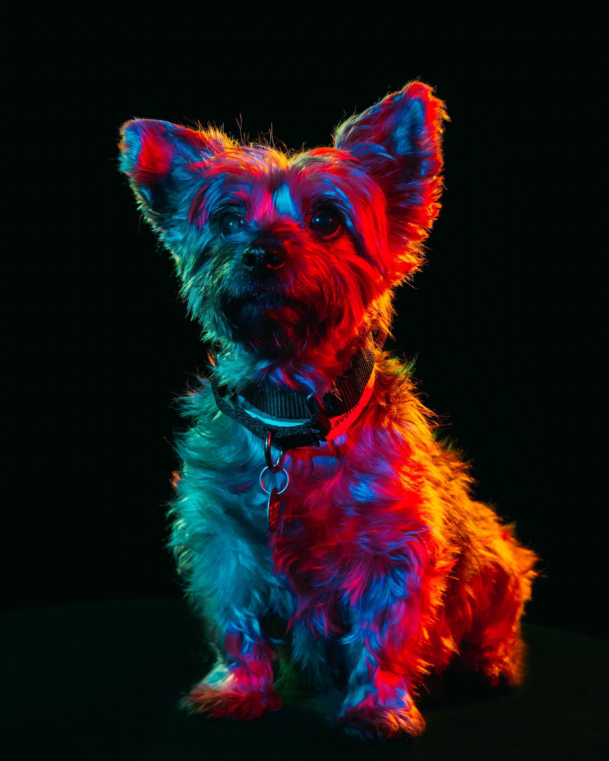 Paul Octavious adoptable dogs portraits 1 (1)