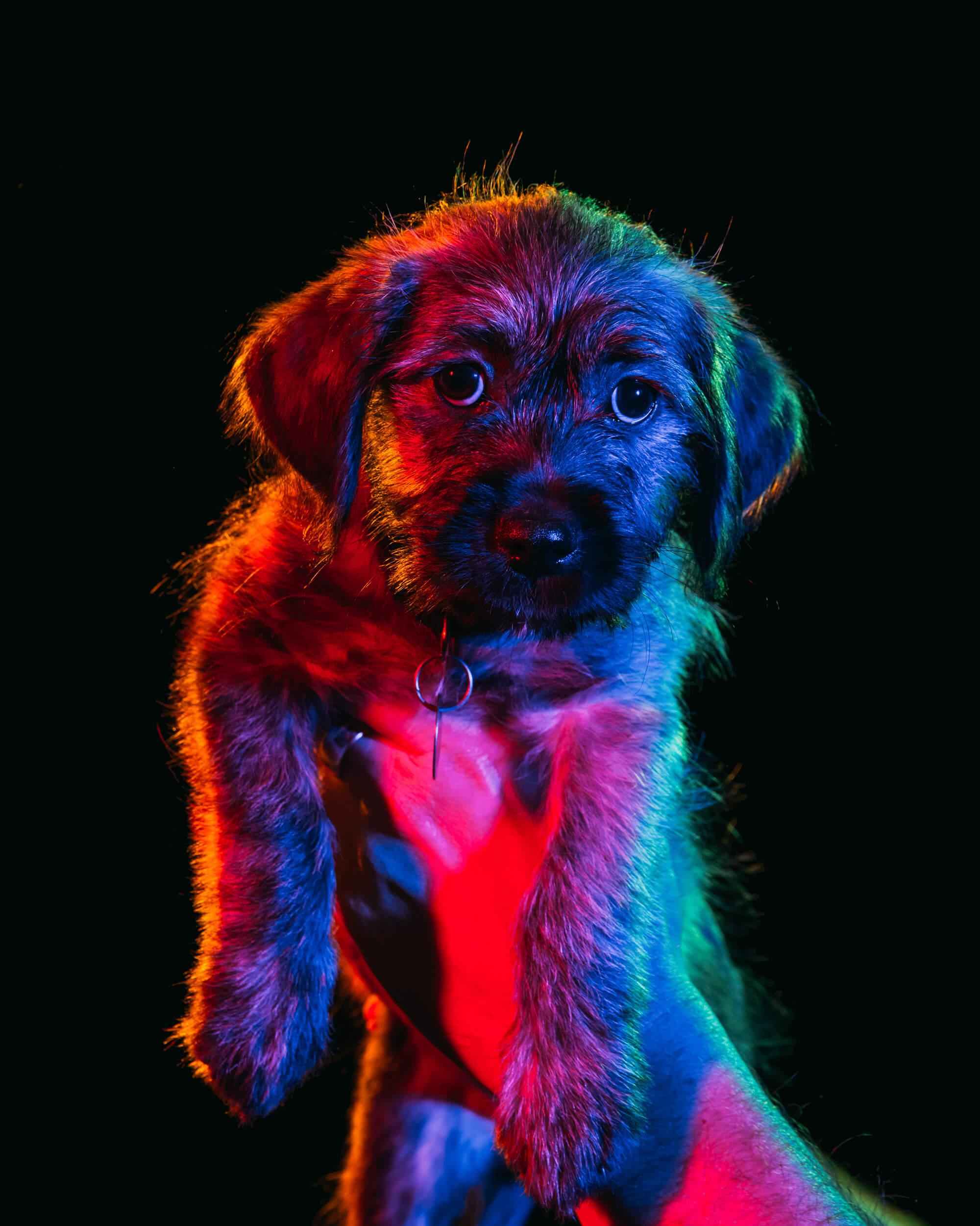 Paul Octavious adoptable dogs portraits 2 (1)