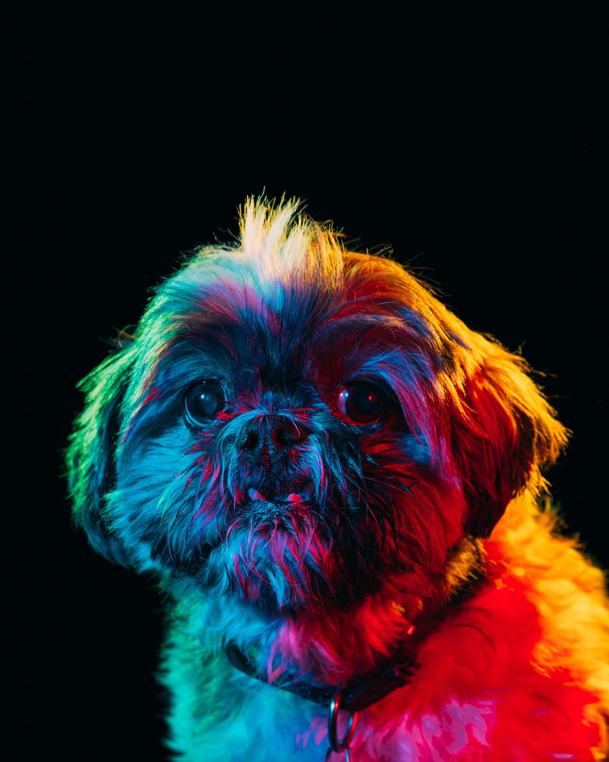 Paul Octavious adoptable dogs portraits 3 (1)