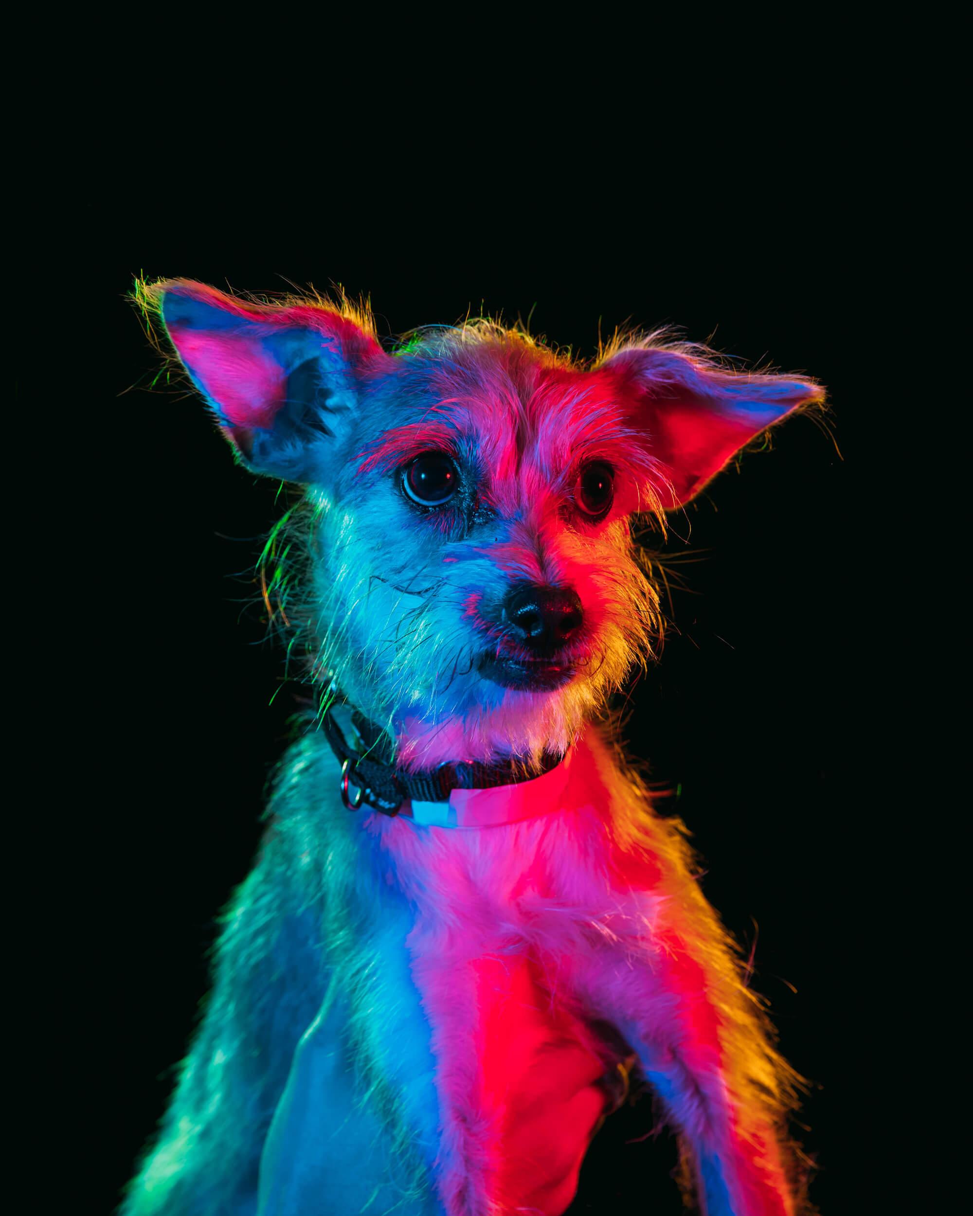Paul Octavious adoptable dogs portraits 4 (1)