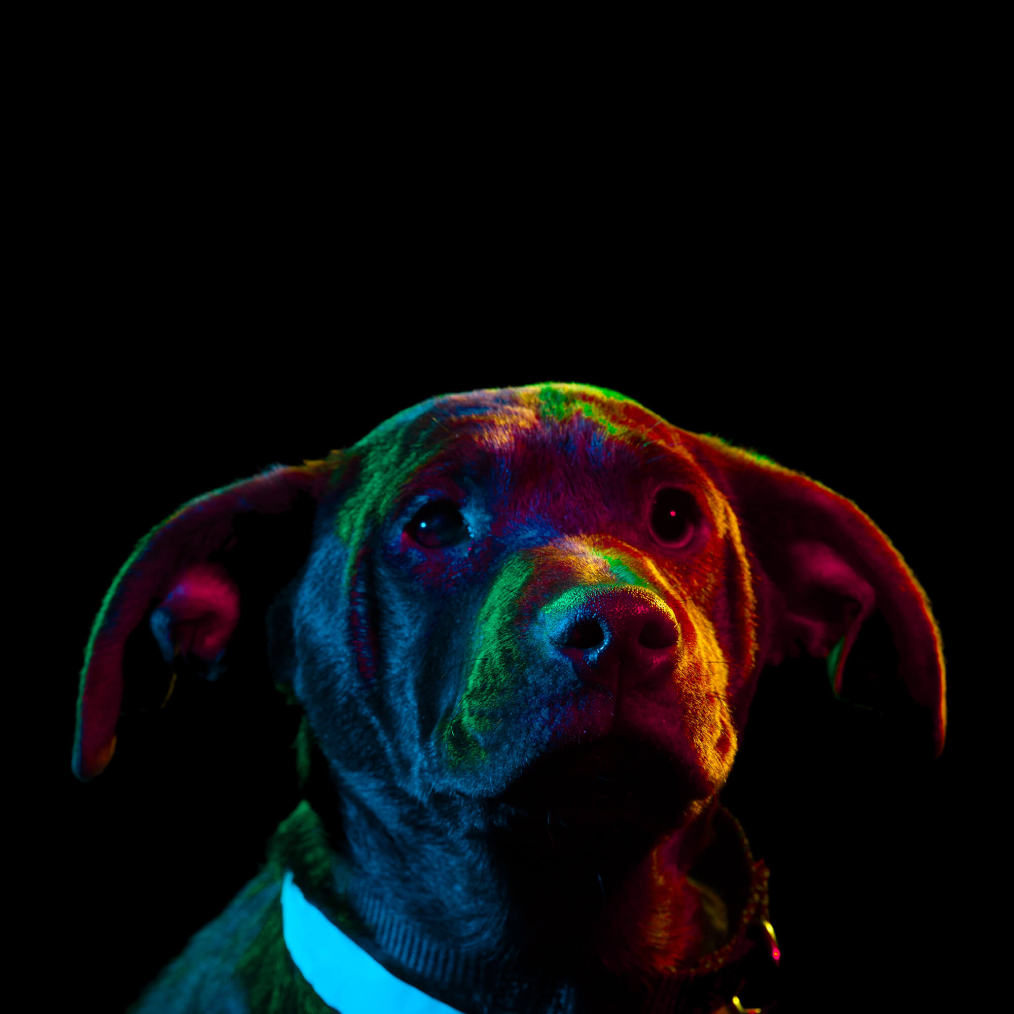 Paul Octavious adoptable dogs portraits 5 (1)