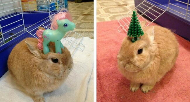 bunnies with things on their head feat (1)