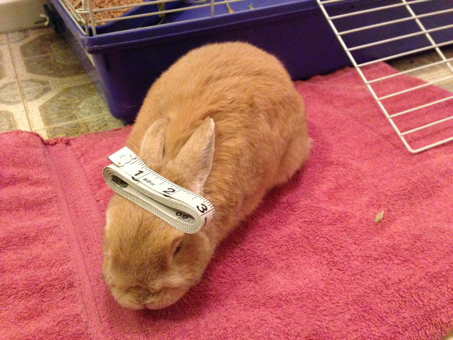 bunnies with things on their heads 10 (1)