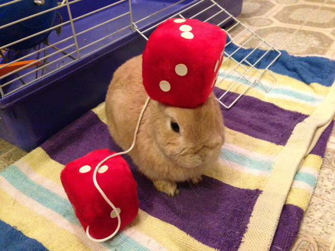 bunnies with things on their heads 12 (1)