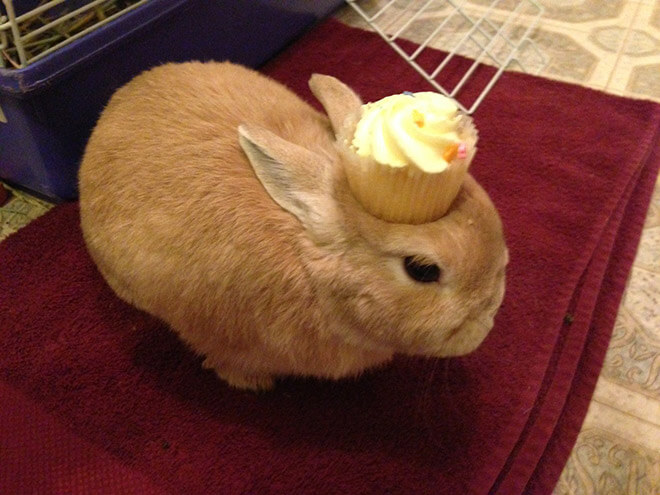bunnies with things on their heads 13 (1)