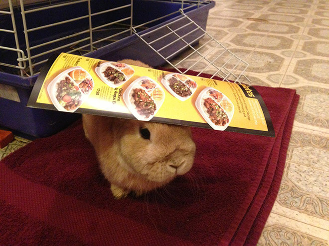 bunnies with things on their heads 14 (1)
