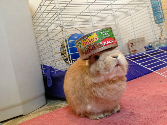 bunnies with things on their heads 15 (1)