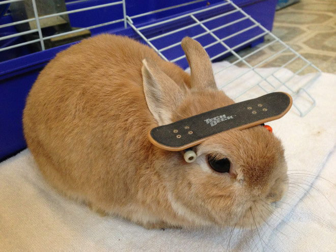 bunnies with things on their heads 16 (1)