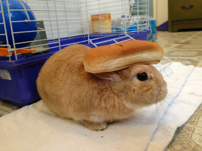 bunnies with things on their heads 17 (1)