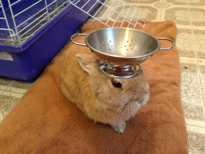bunnies with things on their heads 18 (1)