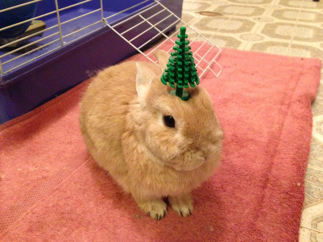 bunnies with things on their heads 19 (1)