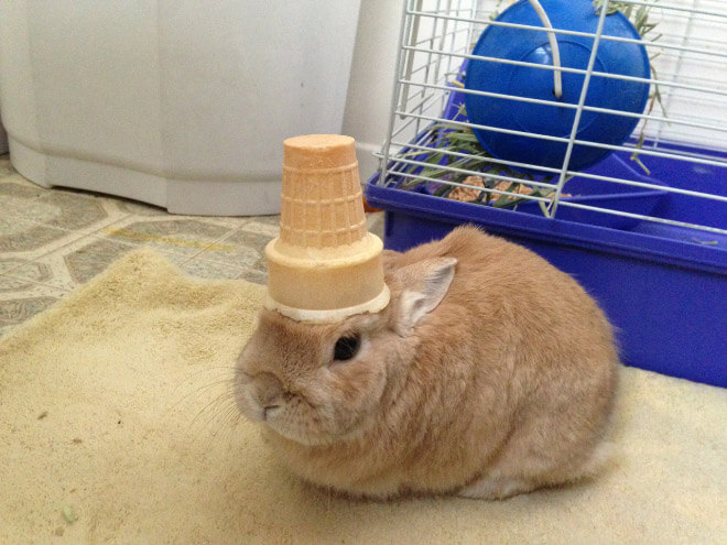 bunnies with things on their heads 2 (1)