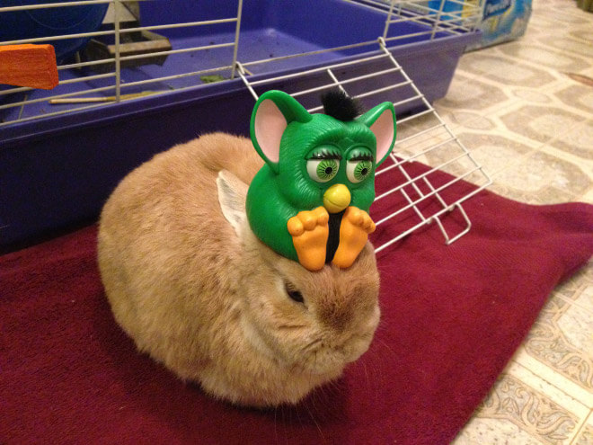 bunnies with things on their heads 3 (1)