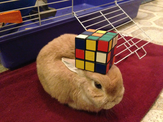 bunnies with things on their heads 4 (1)