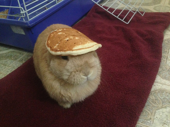 bunnies with things on their heads 5 (1)