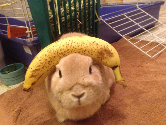 bunnies with things on their heads 6 (1)