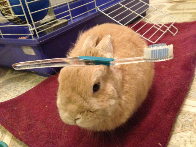 bunnies with things on their heads 7 (1)