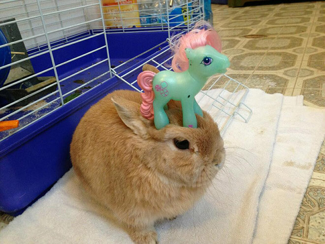 bunnies with things on their heads 9 (1)