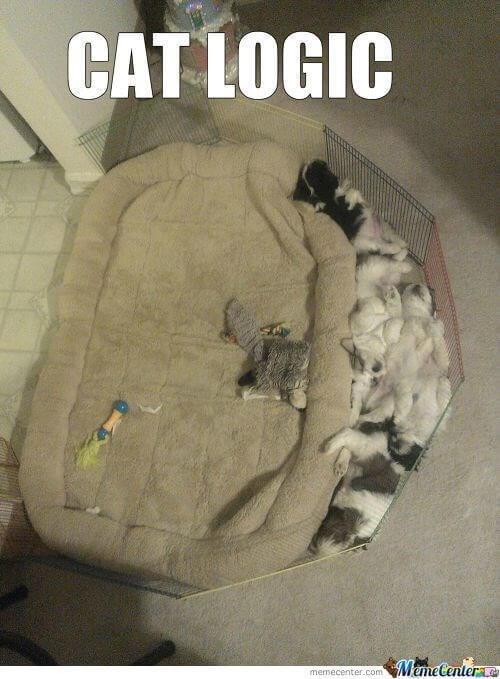 cat logic images 10 (1)