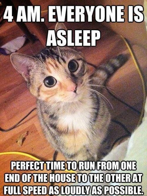 kitten logic memes 14 (1)