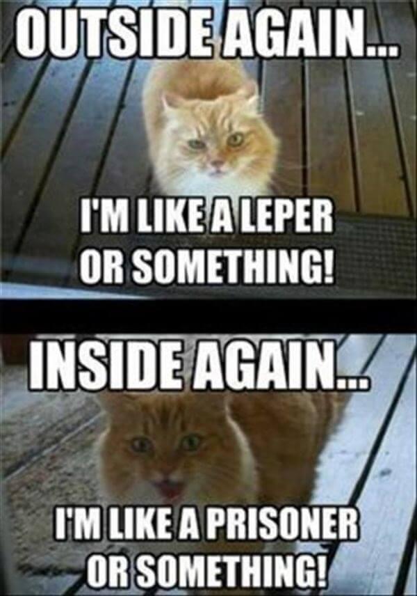 kitten logic memes 15 (1)
