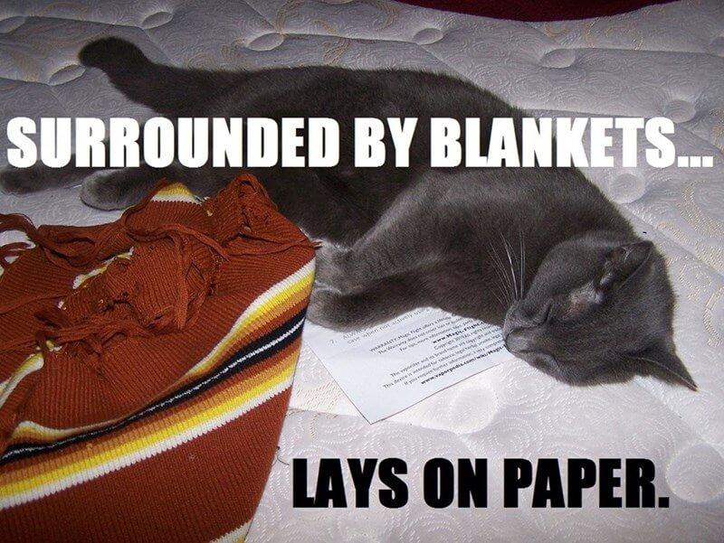 cat logic memes 19 (1)