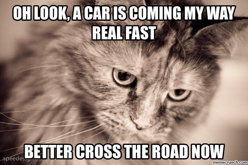 cat logic memes 2 (1)