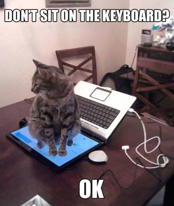 cat logic memes 20 (1)