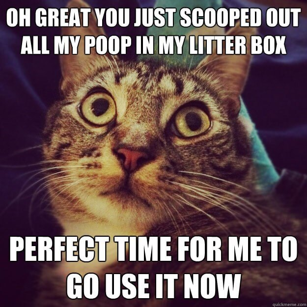 20 Cat Logic Memes Only Cat Owners Will Understand And ...