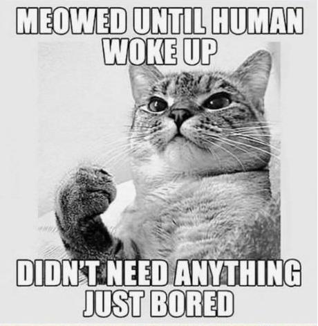 cat logic puns 5 (1)