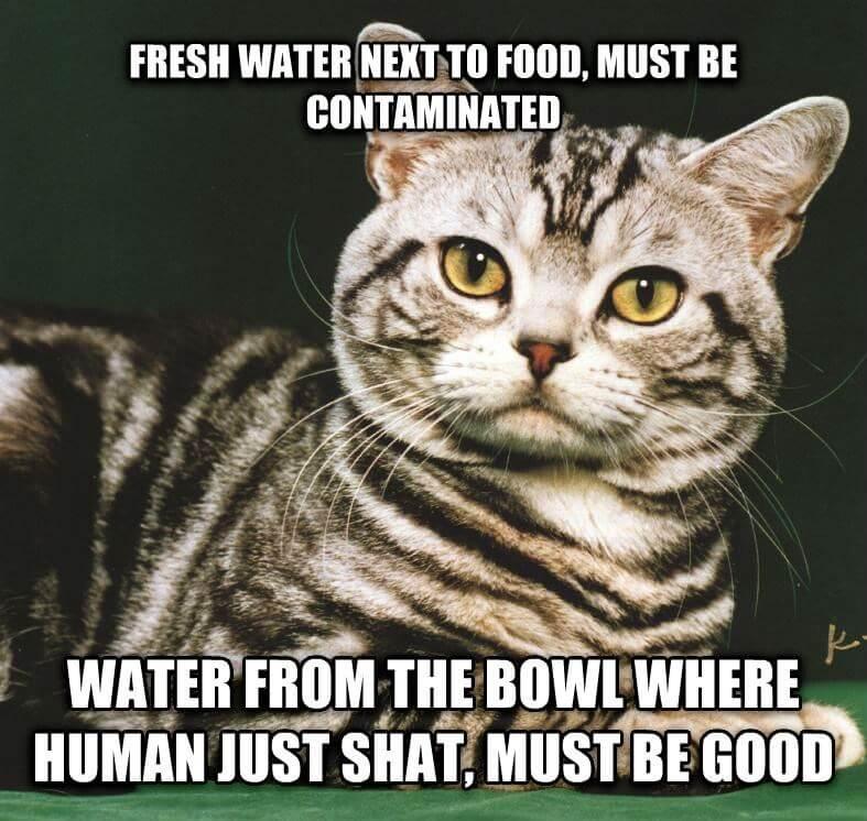 cat logic puns 6 (1)