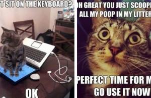 cat logic memes feat (1)