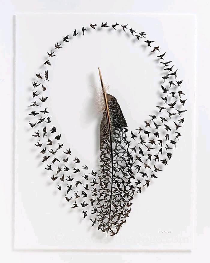 chris maynard feather art 1 (1)