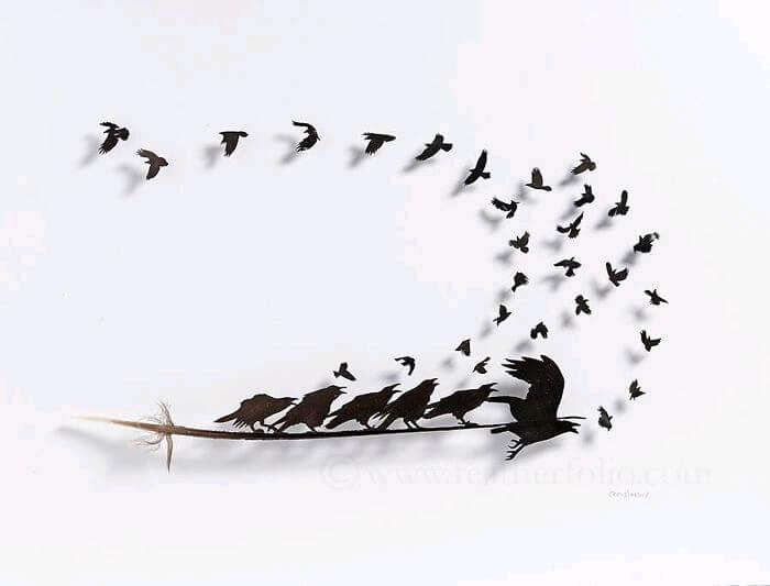 chris maynard feather designs 13 (1)