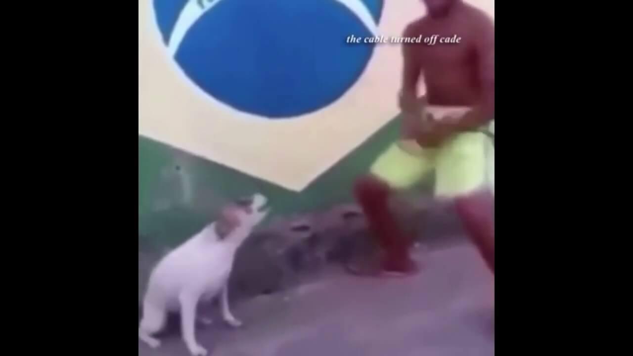 Dance Till Your Dead Dog Video
