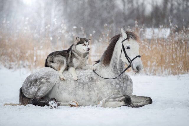 dog and horse friends 1 (1)