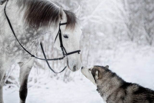 dog and horse friends 2 (1)