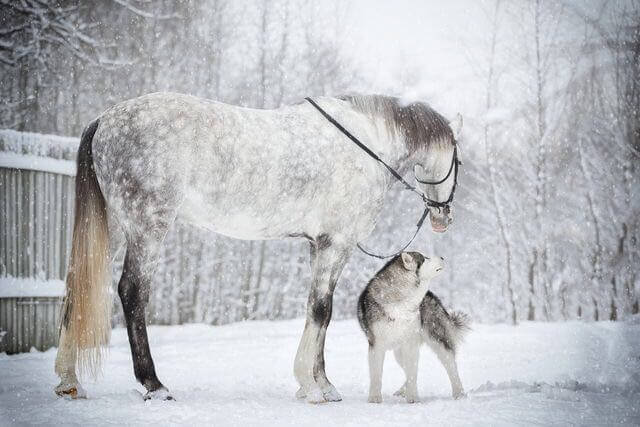 dog and horse friends 3 (1)