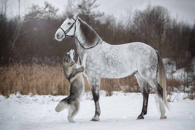dog and horse friends 4 (1)