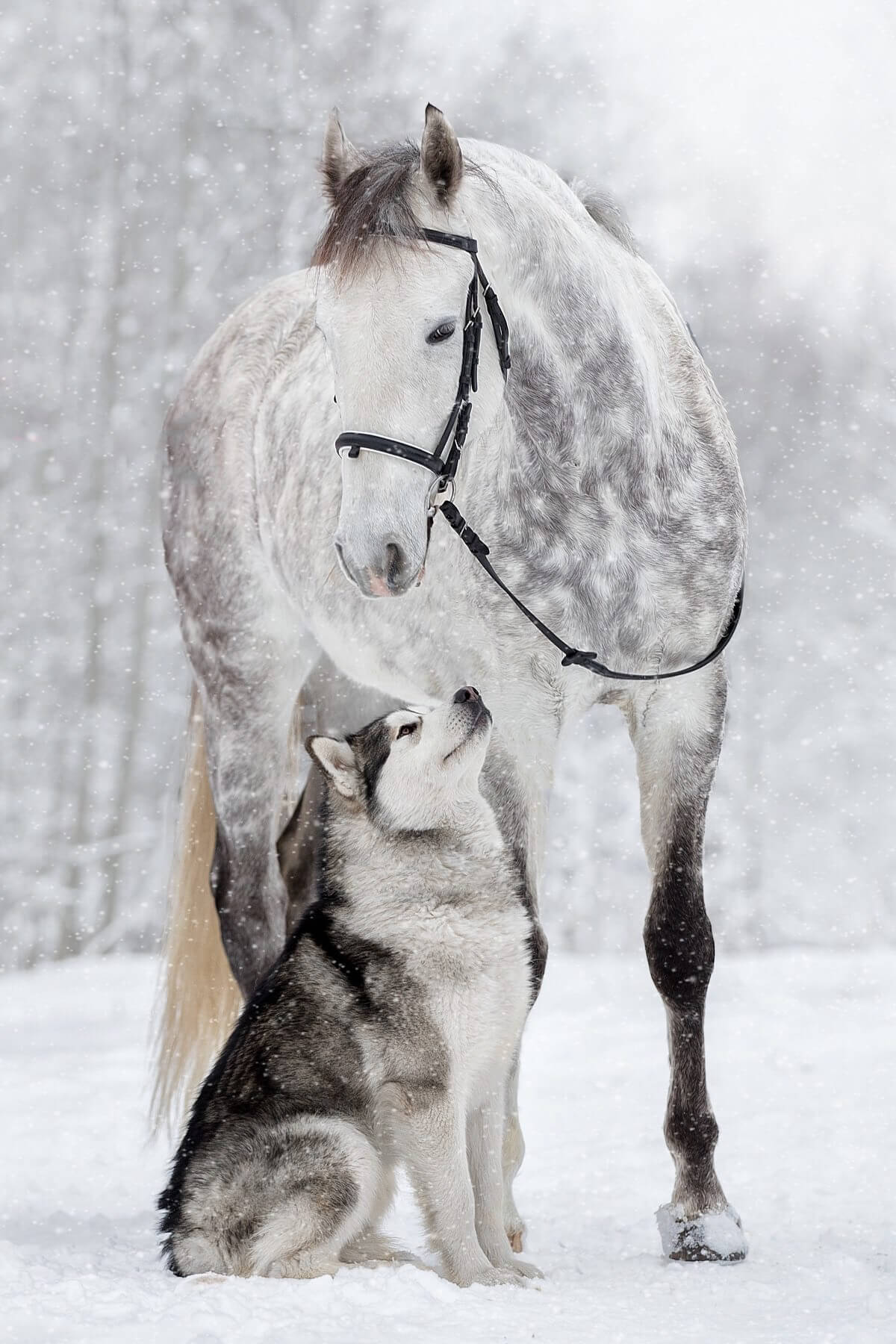 dog and horse friends 5 (1)