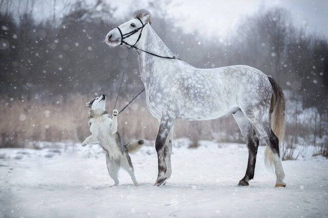 dog and horse friends 6 (1)
