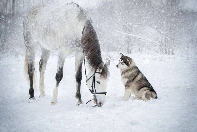 dog and horse friends 7 (1)