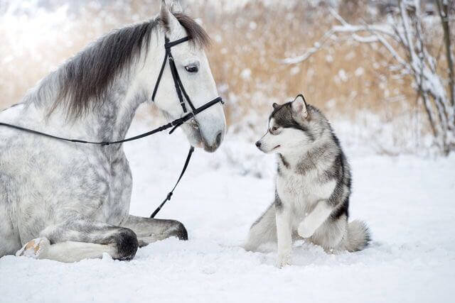 dog and horse friends 8 (1)