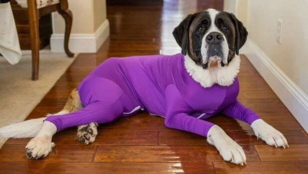 dog leotard feat (1)